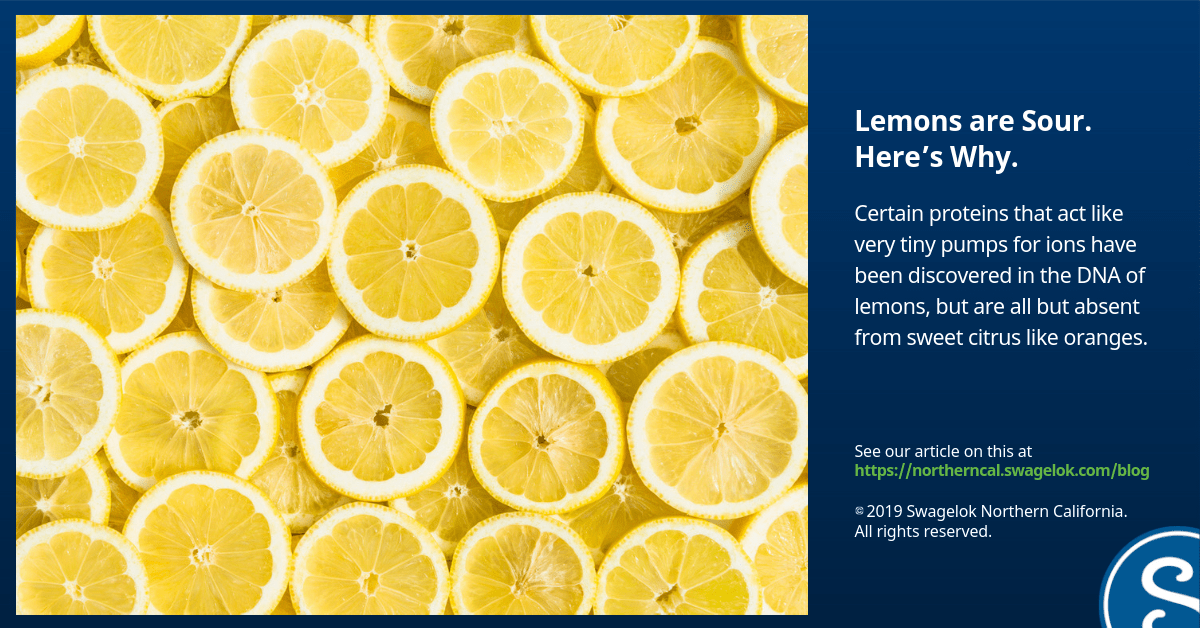 Lemons are Sour. Here's Why.