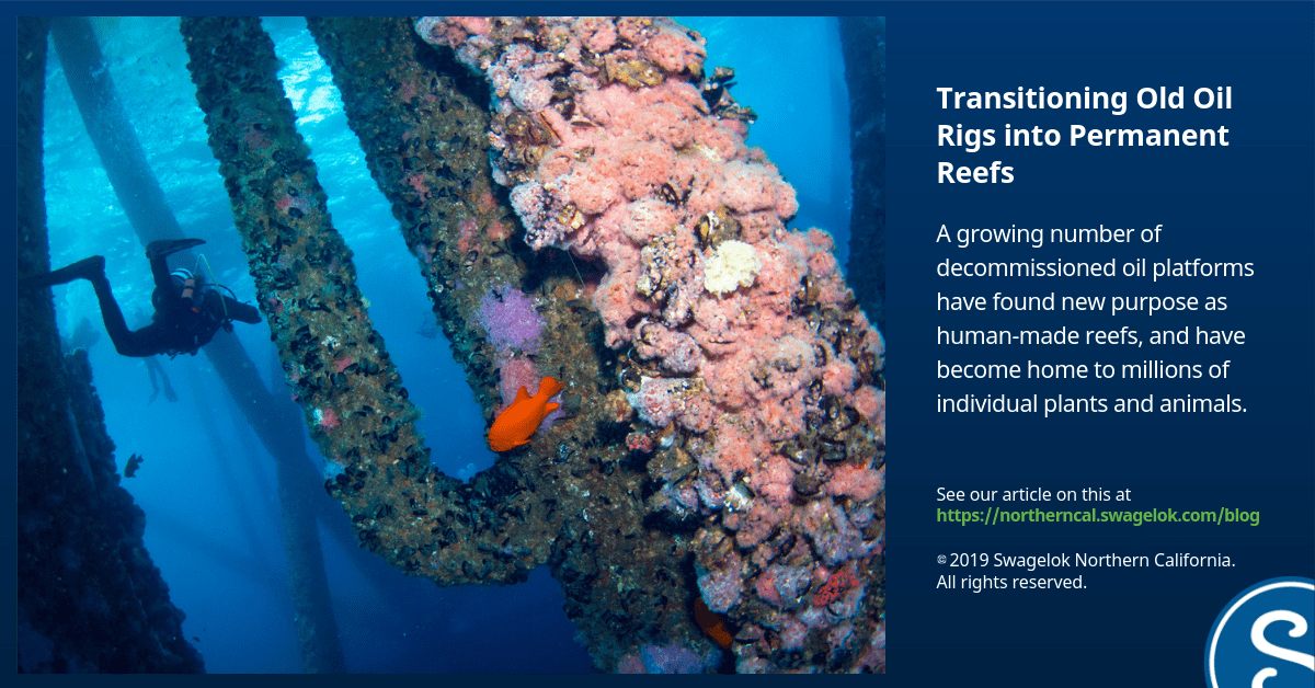 Transitioning Old Oil Rigs into Permanent Reefs